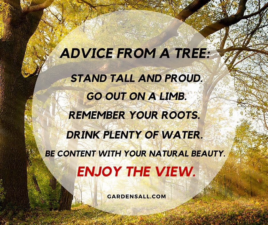 Garden Quotes For Life Growth And Inspiration Gardensall