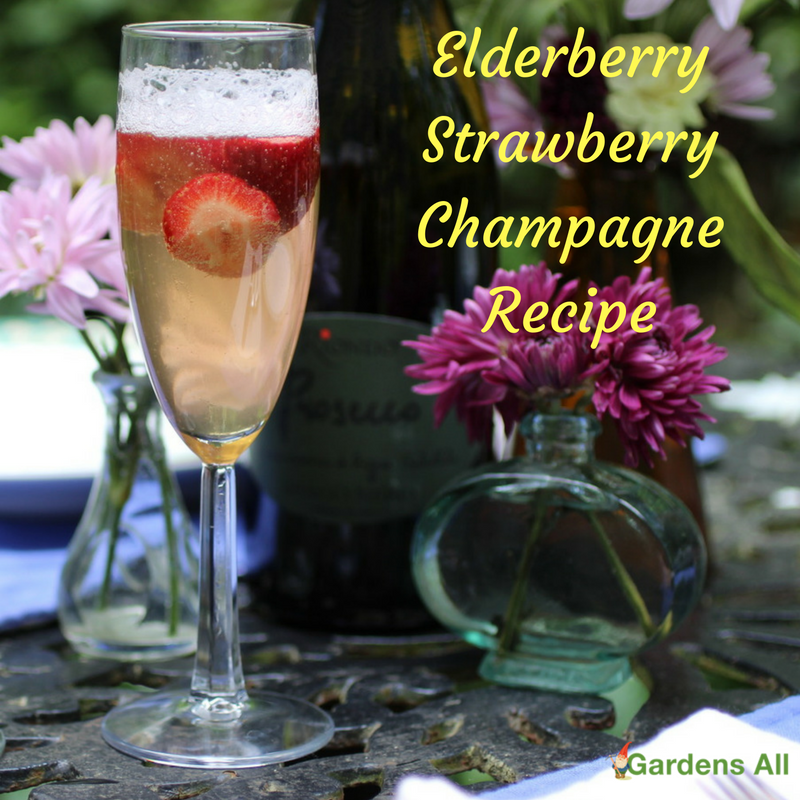Elderberry Strawberry Champagne, perfect for a special occasion or brunch