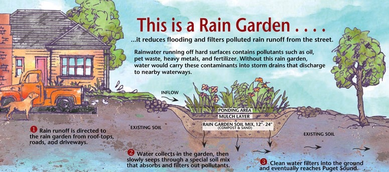 rain-garden-illustration