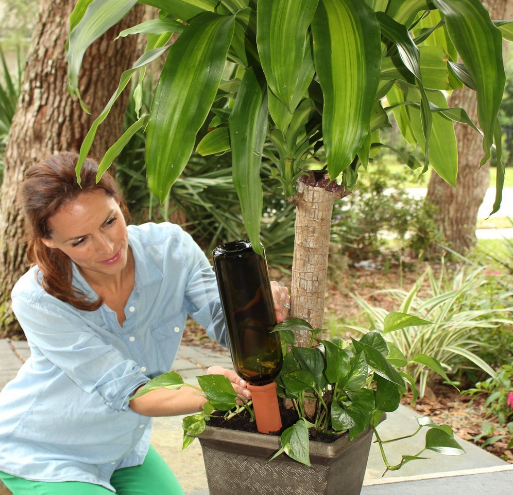 Wine bottle plant spike waterer.