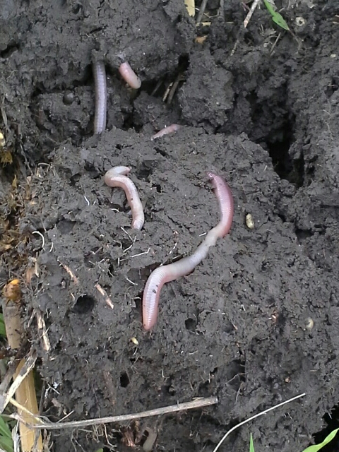 Earth worms, Gary McDonald, Bryan Wagner