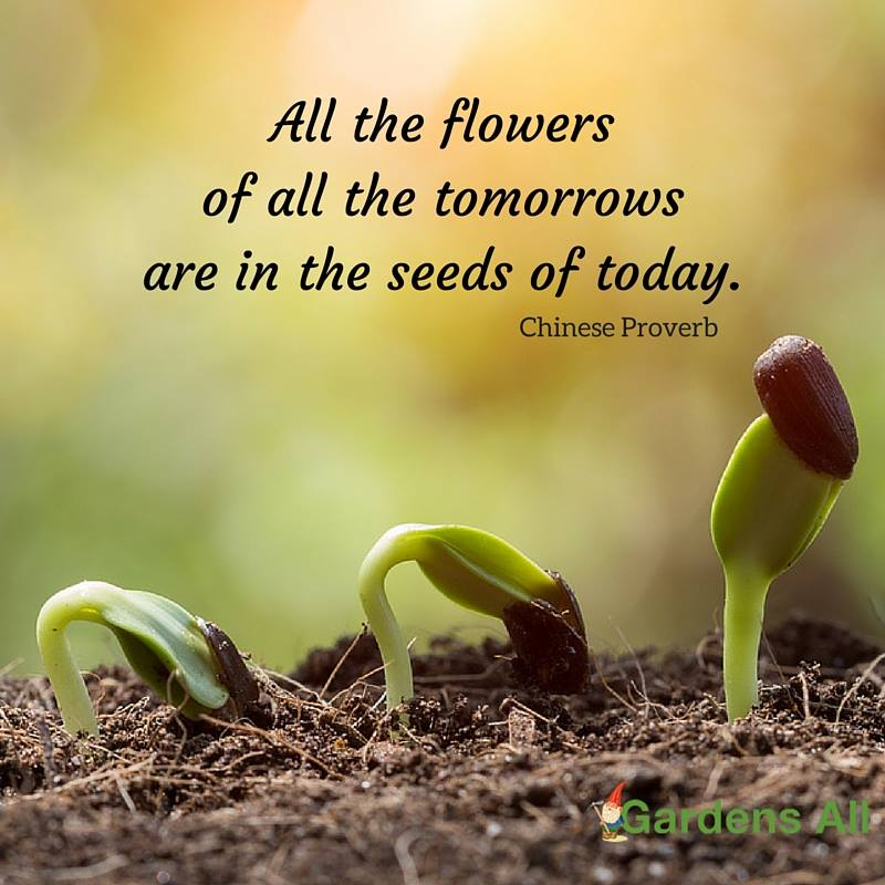 Quotes About Planting Seeds For Life Custom Garden Memes Quotes And Sayings For Life Growth And Inspiration