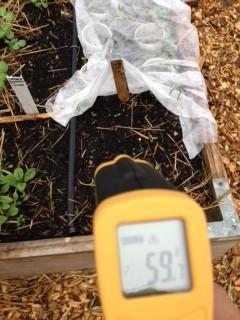 Temperature of soil in raised bed.