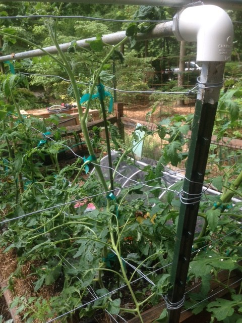 Training up a wire trellis